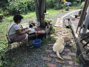 茶々(犬)と木陰で作業しました